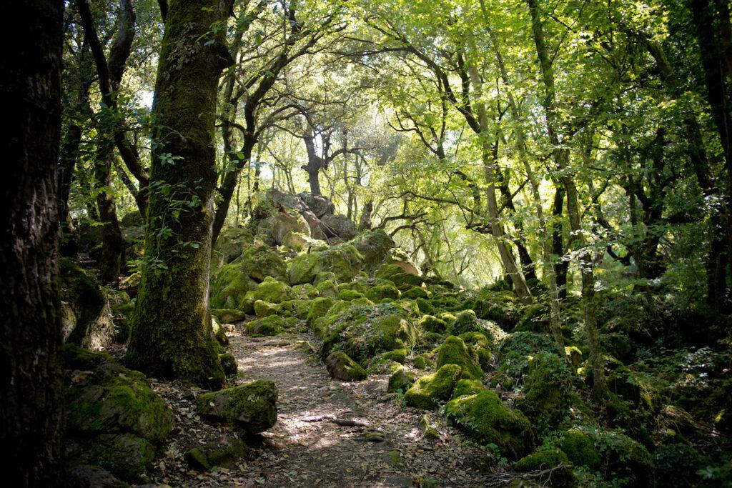 La foresta il Bosco del Sasseto nel Lazio