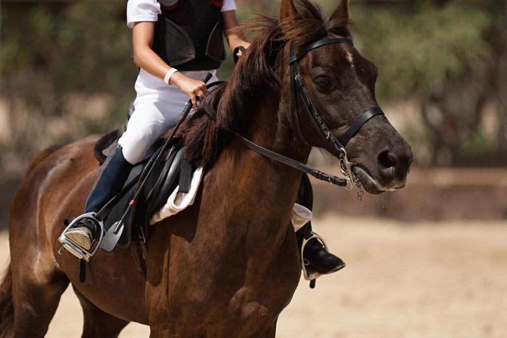 Un giovane ragazzo cavalca il suo cavallo